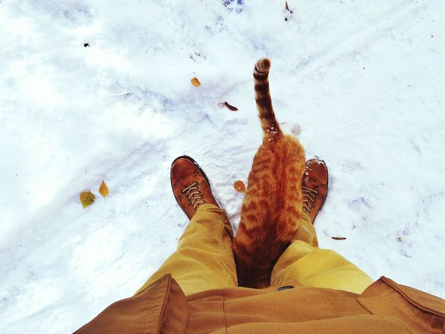 Hello, buddy Cat Boots Snow Winter Popular Photos
