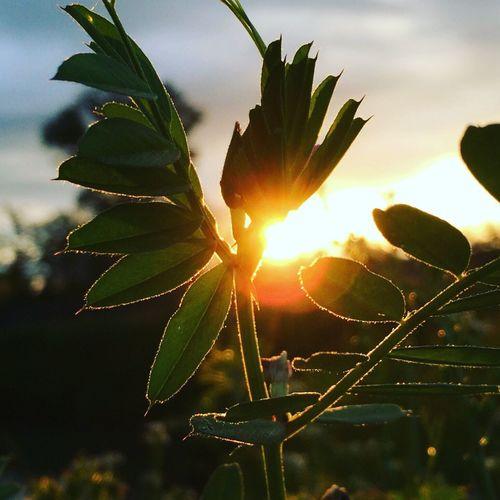 Nature Nature_collection Naturelovers Nature_perfection Naturephotography Sun Sunrise Sunset Sunlight