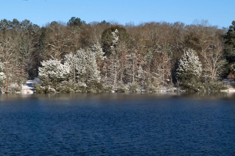 Lake and trees covered with snow Montgomery AL Alabama Montgomery Montgomery, Al. Alabama Outdoors Beauty In Nature Branch Clear Sky Day Flower Growth Lake Nature No People Outdoors Scenics Sky Tranquil Scene Tranquility Tree Water Waterfront