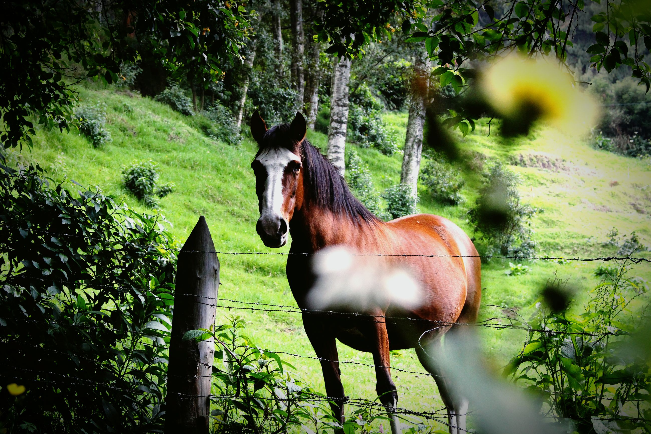 tree, animal themes, growth, horse, nature, no people, mammal, outdoors, domestic animals, one animal, day, grass