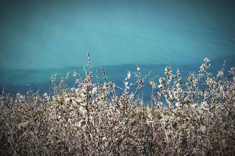 Sea Landscape Flowers