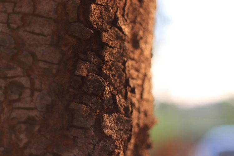 Closeup tree