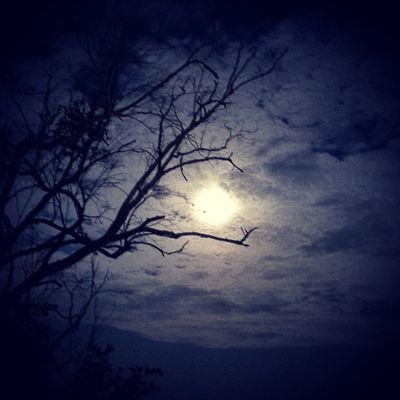 Full Moon Nature Dark Beautiful Tree Mysurumemes Mysore @amazingearthgallery @thephotosociety Storiesofindia Night moon