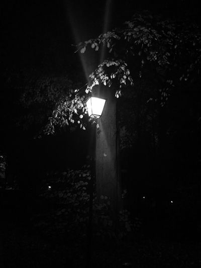 Low angle view of illuminated lamp post against trees at night