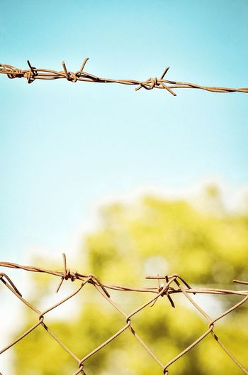 Close-up Of Barbed Wire Fence. Concept Conceptual Cover Security Bar Close-up Backgrounds Abstract Spines Danger Security Bar Razor Wire Barbed Wire Protection Rural Scene Safety Metal Security Chainlink Fence Sky Chainlink Tendril Thorn Spiked Fence Sharp Spiky Wire Boundary Wire Mesh Crisscross