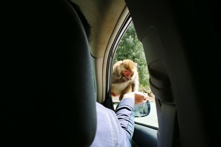 Monkey Pakistani Traveller Murree Driveway Outdoors OpenEdit More...