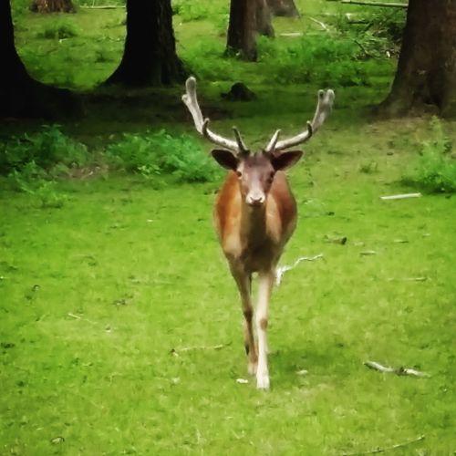 Time for nature Reh Deer Animal Wild Wild Animal Wildpark Hamburg Nature