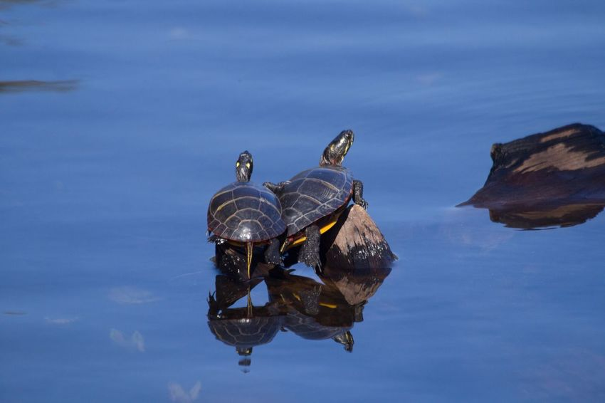 Water Nature Animals In The Wild No People Sky Blue Animal Wildlife Turtle Reptile