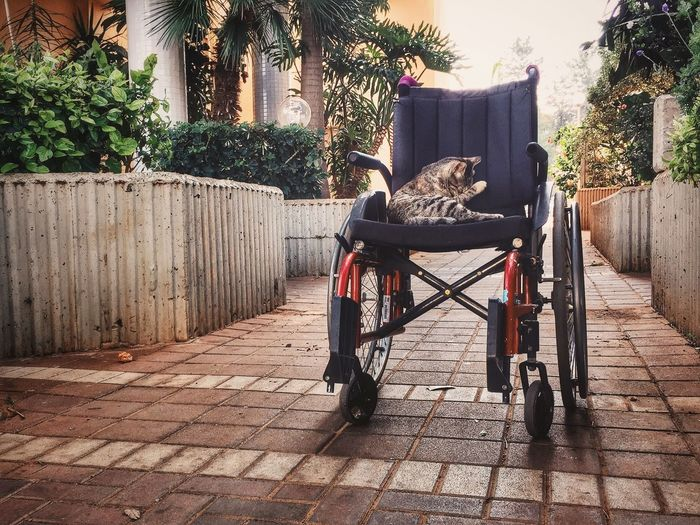 Streetphotography Cat IPhoneography Iphone6plus Cats