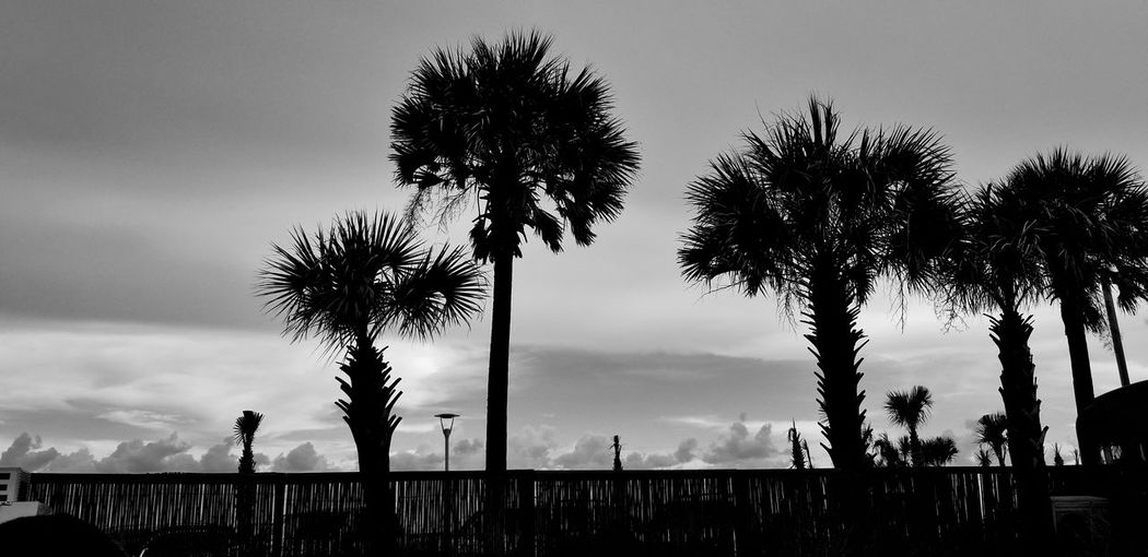 sundown Gulf Shores, AL Black And White Photography Black And White EyeEm Selects Visual Creativity Palm Trees Oceanside Sundown Tree Palm Tree Silhouette Full Length Tree Trunk Oil Pump Dramatic Sky Sky Cloud - Sky Cumulus Cloud Cloudscape The Great Outdoors - 2018 EyeEm Awards The Traveler - 2018 EyeEm Awards Summer Road Tripping HUAWEI Photo Award: After Dark My Best Travel Photo This Is Natural Beauty Capture Tomorrow My Best Photo
