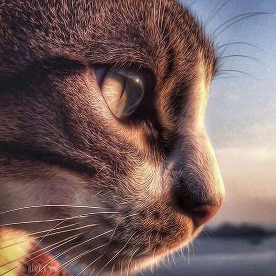 🐯 Cat♡