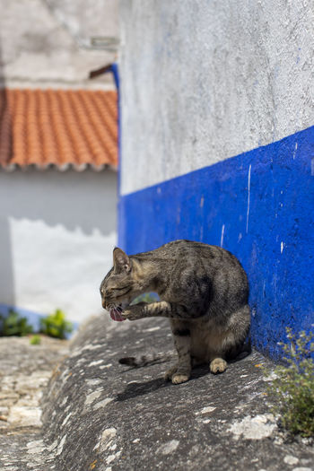 View of a cat on wall