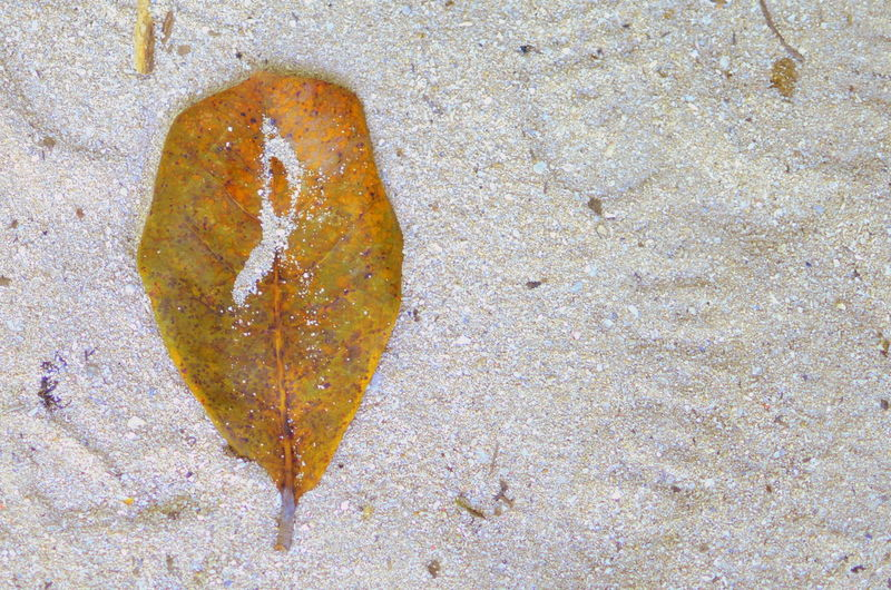 Close-up High Angle View Leaf Leaves Leaves Only Leaves Leaves_collection Leaves🌿 Music Note Music Note Drop Music Note Leaf Music Note On A Leaf Music Notes Music Notes In The Shape Of A Star Natural Create Natural Creation Nature No People Note Note2 Note3 Note4 Note5 Notes Outdoors Sand