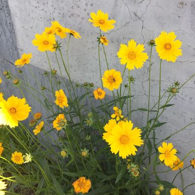 Korea Slim Flower Yellow Beauty In Nature Nature Spring