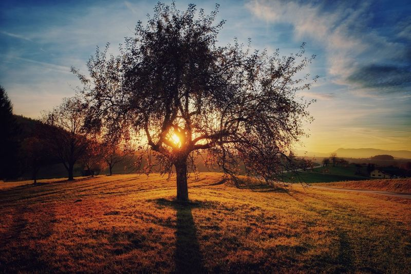 Daily Inspiration Sunset Nature Tranquil Scene Beauty In Nature Tree Sky Field Tranquility Scenics Landscape Sunlight Grass Sunbeam Capture The Moment Melancholic Landscapes A Photo Like A Painting Austria Idyllic Vienna Alps Autumn Mystical Atmosphere EyeEm Selects