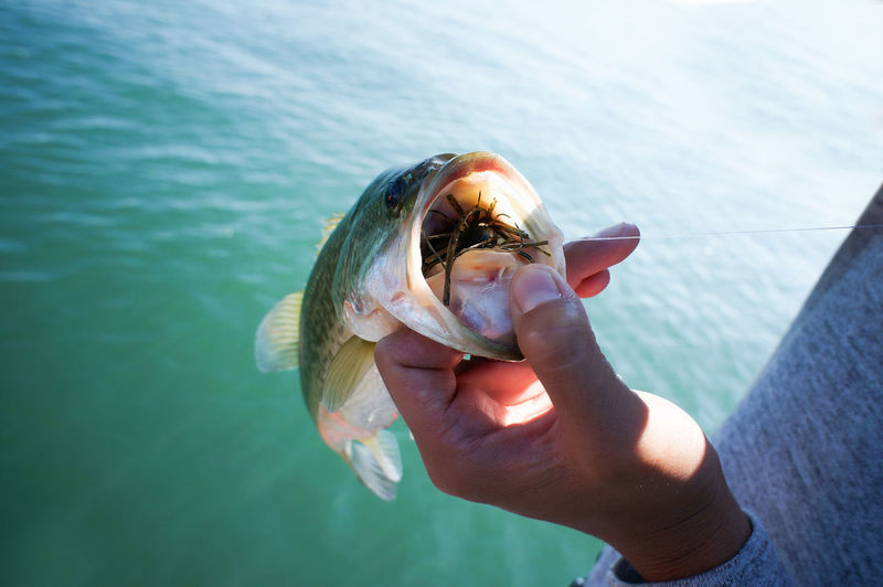 Close-up of hand holding catch of fish over sea