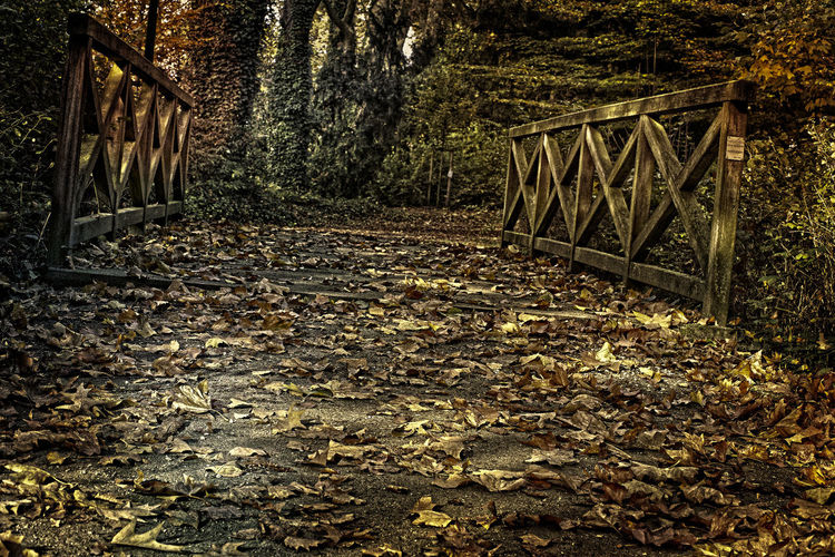 Bridge Day Herbststimmung Herbsz Laub Nature No People Outdoors Tranquility Tree