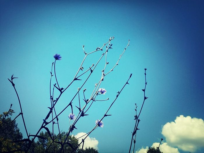Flowers EyeEm Nature Lover Clouds And Sky The EyeEm Facebook Cover Challenge