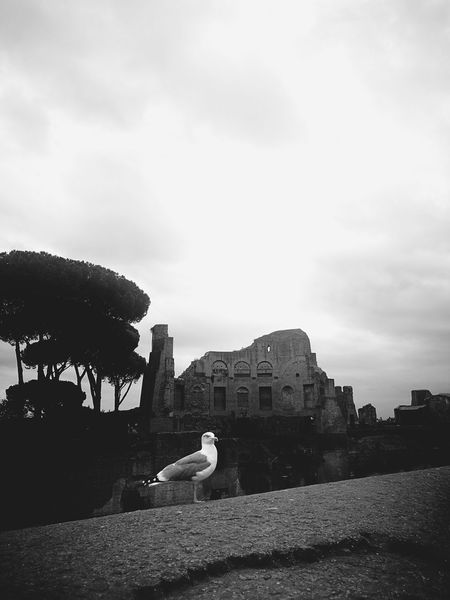 Keeper of the past. Rome Italy Travel Destinations Palatine Hill History Historical Building Roman Culture Black And White Bird Dinosaur Street Art Built Structure Outdoors Only Men One Man Only Day An Eye For Travel