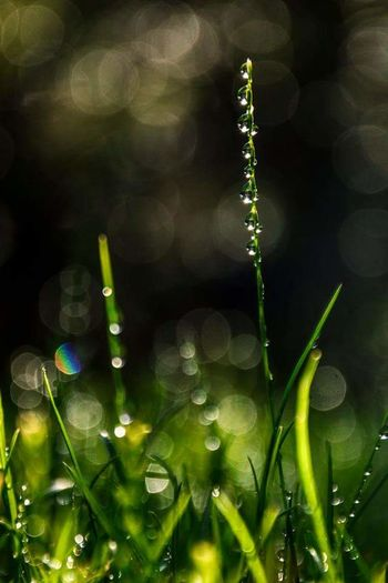 Plant Nature Beauty In Nature Water Growth Freshness Defocused Flower Leaf Close-up Green Color Fragility Grass No People Black Background Outdoors Flower Head Day