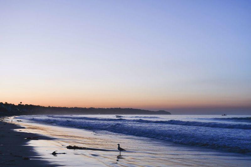 Morning Glow in Malibu... I'm missing you...Malibu🌊💔 : I♡SD California EyeEm Best Shots EyeEm Nature Lover Bird Seagull Seashore Sunrise Dawn Sea Sky Beach Land Scenics - Nature Beauty In Nature Tranquility Clear Sky Copy Space Nature