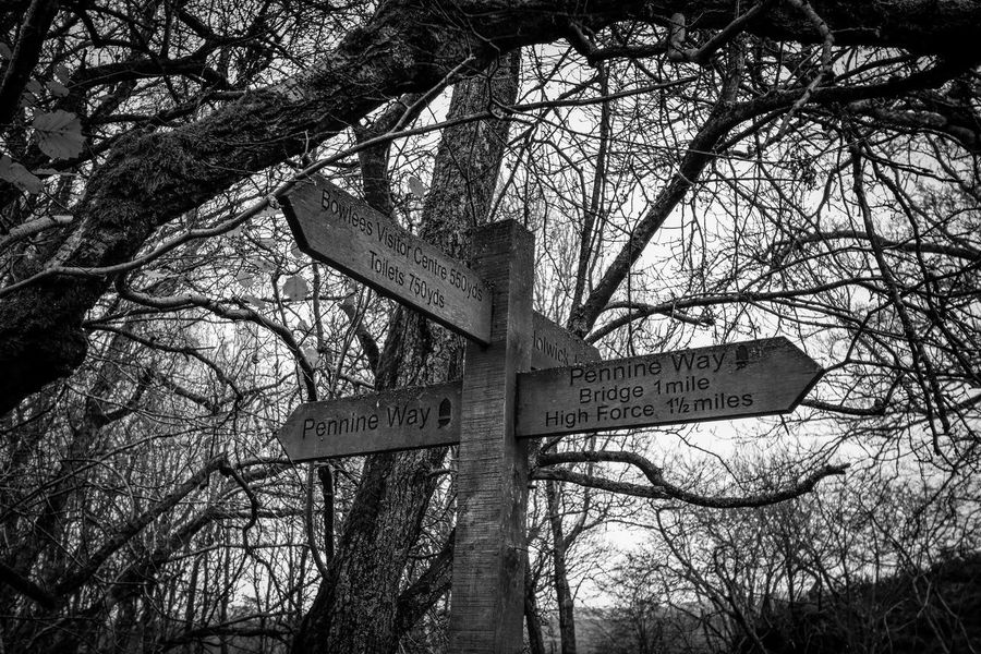 Which way? 🤔 Directions Signpost My Point Of View Direction EyeEmBestPics Blackandwhite Black & White EyeEm Best Shots Black And White Bnw_collection Blackandwhite Photography Nikonphotography Hikingadventures Teesdale Eye4photography  Tree Low Angle View Plant Branch No People Nature Day