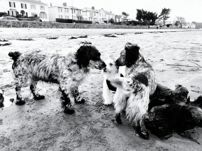 Blackandwhite Photography Dogs Beach Lintonbeach