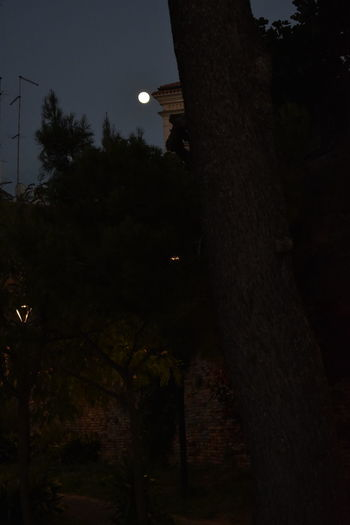 Architecture Building Exterior Built Structure Dark Growth Illuminated Lighting Equipment Low Angle View Moon Nature Night No People Outdoors Plant Sky Street Technology Tree Tree Trunk Trunk
