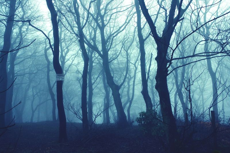 Fog Mania Misty Devil Witches Brew If You Go Down To The Woods Today Fog Woods Woodland Walk Calderdale Mist Madness Forest Nature Landscape Spooky Scenics Beauty In Nature Tranquility Tree Trunk Tranquil Scene Outdoors Tree Trunks Yorkshire Mystical Atmospheric Mood Tree Tree Area