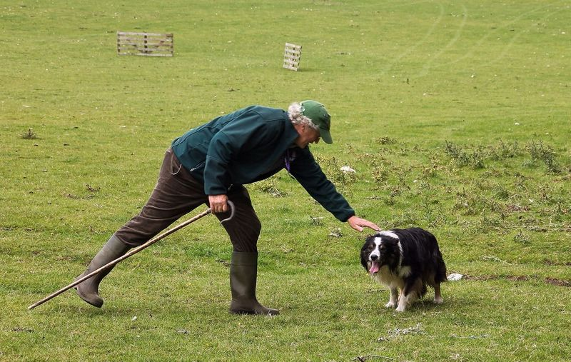 Service Animals One man and his dog. Shepherd shows his appreciation for his working dog.
