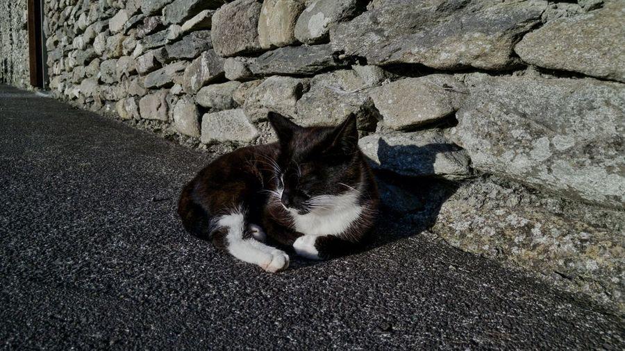 Cat Ireland Travel Vacation Country County Kerry Grey Brown White Dingle Peninsula Ireland
