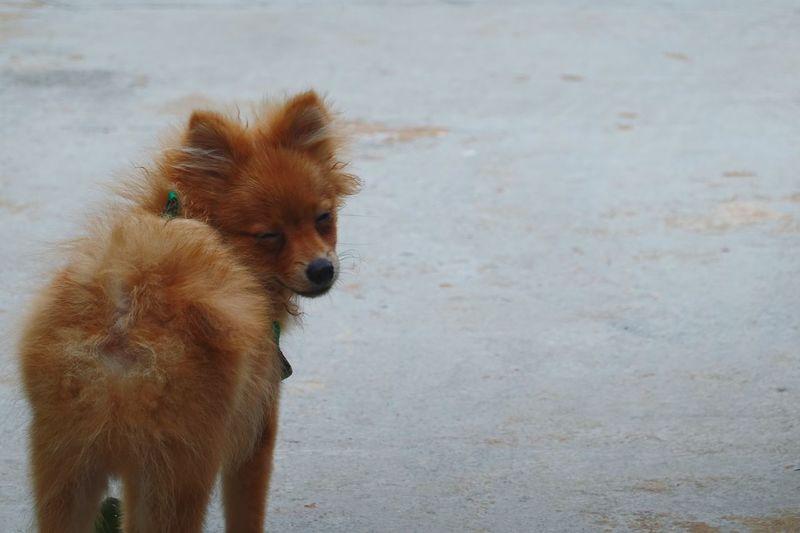 Portrait of dog standing