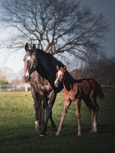 Nature Lover Mother And Child Little Horse Colt Horses Majestic Beautiful Mammal Animal Animal Themes Domestic Animals Domestic Pets Vertebrate Grass Plant Horse Field Livestock Animal Wildlife Tree Land Nature Group Of Animals Two Animals Day
