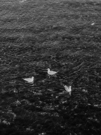 High angle view of birds swimming in sea