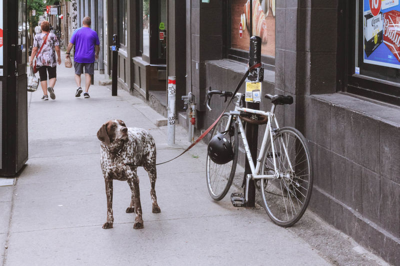 City City Life Cityscape Exterior Light Montréal Nature Adult Animal Themes Canada City Color Day Dog Domestic Animals Full Length Landscape Mammal One Animal One Person Outdoors People Pet Leash Pets Street Streetphotography Walking