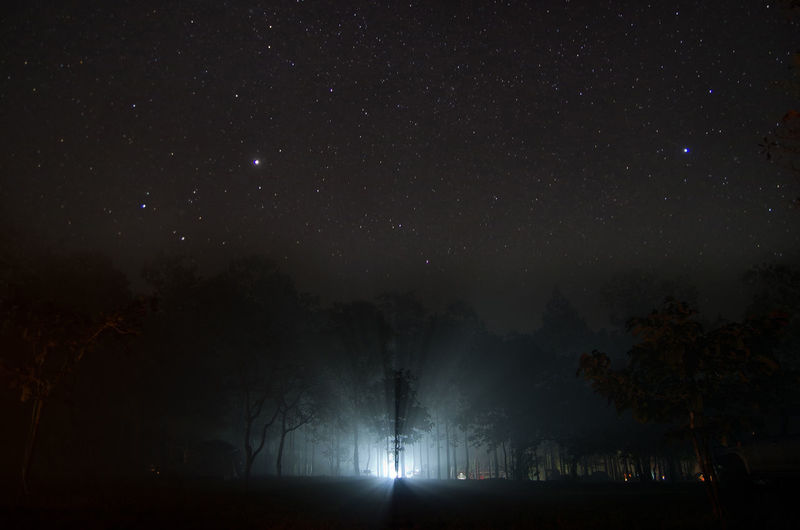 Light Streaming Through Trees Against Star Field