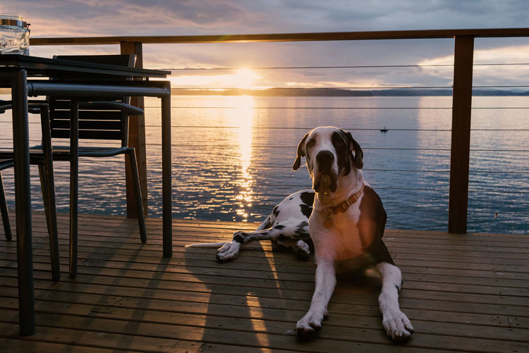 Dog sitting on pier by sea against sky during sunset