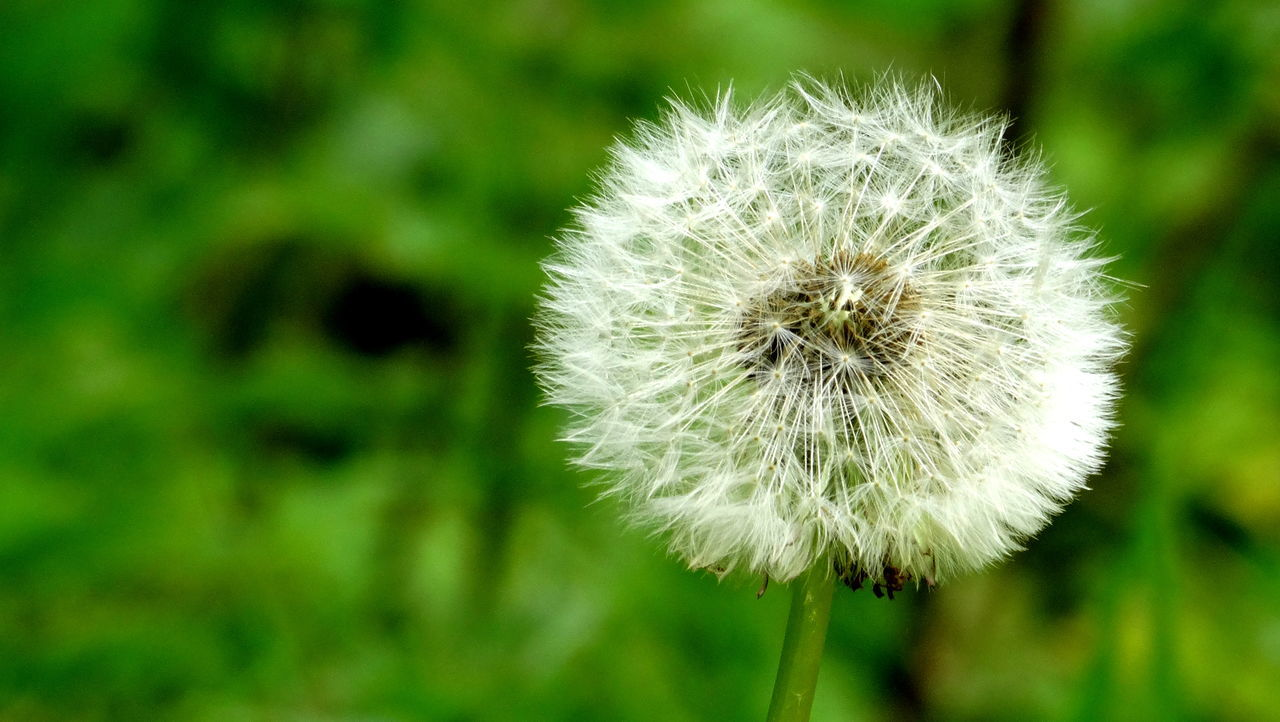 nature, flower, growth, focus on foreground, fragility, plant, beauty in nature, close-up, no people, outdoors, day, flower head, freshness