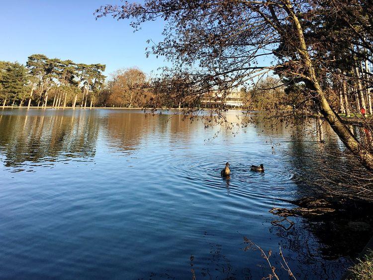 Neuilly Sur Seine Dream Rêve Ciel Canard Moment Of Silence Incroyable  Ciel Et Nuages
