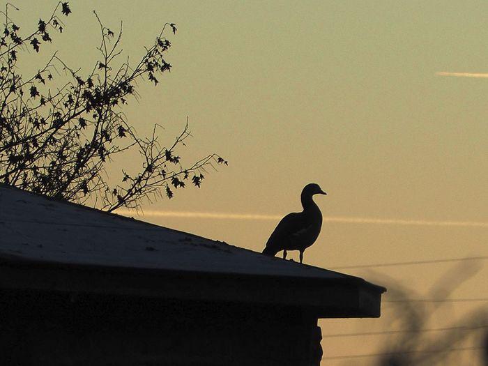Autumn Bird Herbst Herbststimmung Licht Und Schatten Light And Shadow Nature Nature Photography Vogel