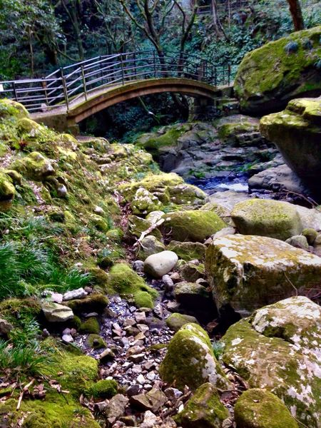 Creekside Creek Creekside Bridge Creekside Photography Nature Rock - Object Beauty In Nature No People Forest Tree Day Outdoors Scenics Japan Photography