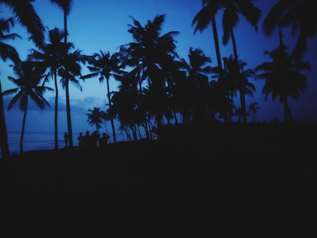 Palm Tree Tree Silhouette Tropical Climate Nature Sunset Beach Scenics Night Tree Trunk Travel Destinations Vacations Sky Tranquility Landscape Tree Area Beauty In Nature Tranquil Scene Outdoor Pursuit Outdoors