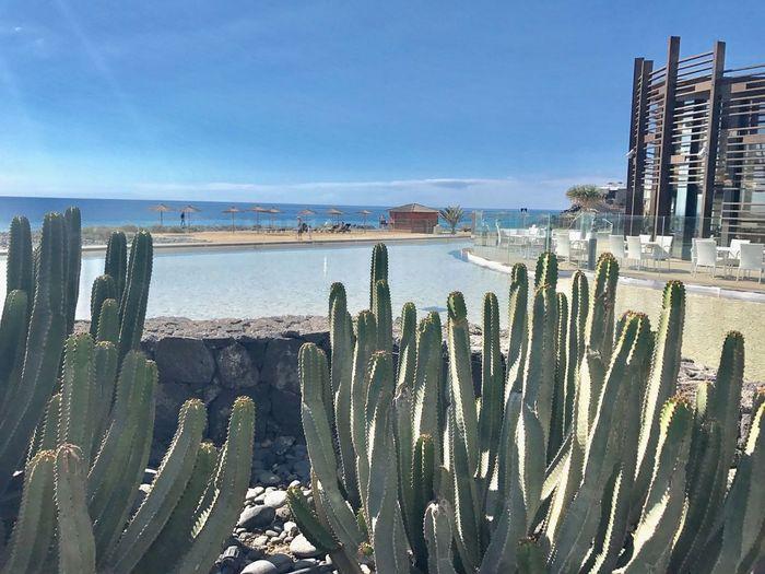 Tenerife. Foto