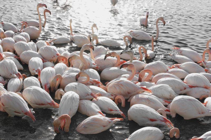 Flamingo EyeEm