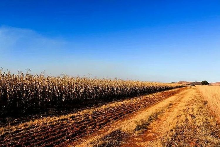 Road passing through field against cloudy sky