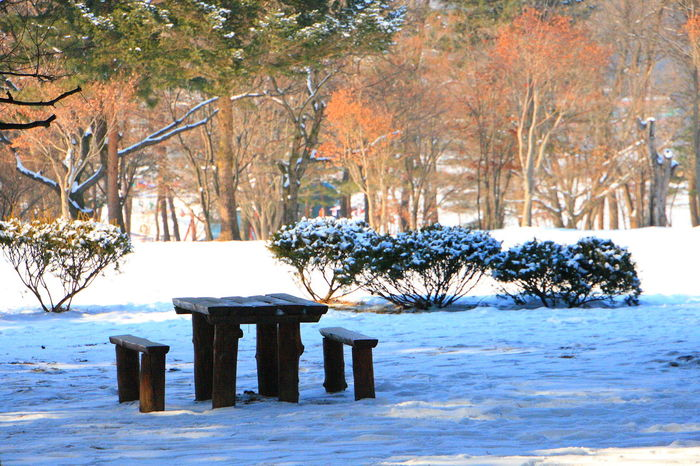 Tree Winter Wood - Material No People Cold Temperature Nature Snow Tranquility Beauty In Nature Outdoors Water Day Winter Clear Sky Tranquility Snow Time Korea Nami Island , Korea Nami Island Tree Trees Trees And Nature