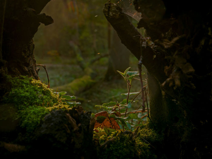 autumn post one. moss, rotten wood, young trees and magical light Autumn Beauty In Nature Close-up Forest Moss Nature Nature Photography Outdoors