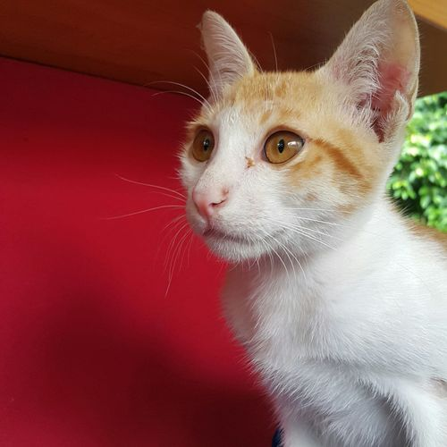 Thecats Eyefocus Animal