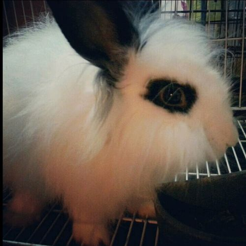 Pets Cute Rabbit My Luvly SnowBits