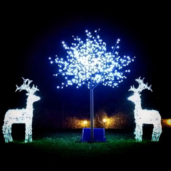 Reindeer.. Christmas is coming Sky Tree Outdoors Christmas Decoration Celebration Night Christmas Star - Space Arts Culture And Entertainment Backgrounds Midnight Reindeer Reindeer Sighting Reindeers Illuminated